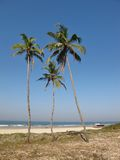 Coco palms on the beach Royalty Free Stock Image