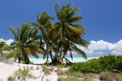Coco palms on the blue water lagoon beach. Royalty Free Stock Images