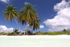 Coco palms on the white sandy beach Stock Photography