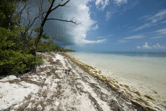 Coco plum beach florida keys. Cloudy and ominous coco plum beach florida keys with small dog royalty free stock photography