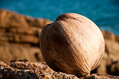 Coco @ a praia Imagens de Stock