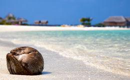 Coco que miente en una playa Foto de archivo