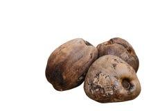 Coco secado isolado no branco Fotografia de Stock