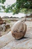 Coco seco Foto de archivo libre de regalías