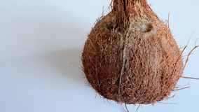 Coco seco Fotografía de archivo libre de regalías