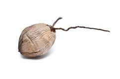 Coco seco aislado Fotografía de archivo libre de regalías