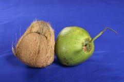 Coco seco y verde Imágenes de archivo libres de regalías