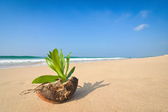 Coco on the shore Stock Images