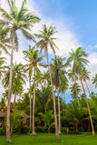 Coco trees on the beach Royalty Free Stock Image
