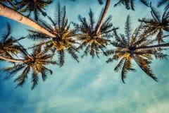 Coco trees Stock Image