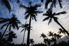 Coco trees under sky Stock Image