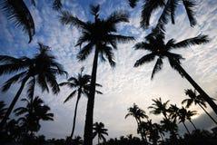 Coco trees under sky Stock Image