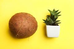 Coco tropical y cactus suculento foto de archivo