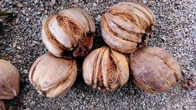 Coco velho após a casca Foto de Stock Royalty Free