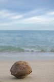 Coco velho na praia Fotografia de Stock