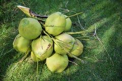 Coco verde Imagem de Stock Royalty Free