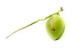 Coco verde fresco fotos de archivo