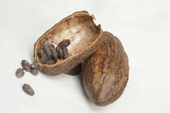 Cocoa. Fruit with the seed as the main substance of a chocolate Royalty Free Stock Images