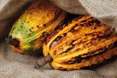 Cocoa Stock Photos