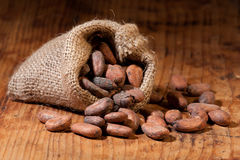 Cocoa in bag. Raw cocoa beans spilling out of a burlap bag on a wooden table. Shallow depth of field Stock Photography