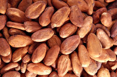 Cocoa bean Royalty Free Stock Images
