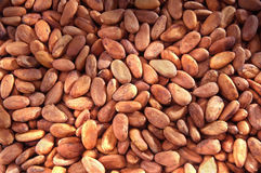 Cocoa bean Royalty Free Stock Photography