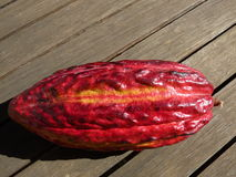 Cocoa Bean. Red and yellow cocoa bean from New Caledonia Stock Images