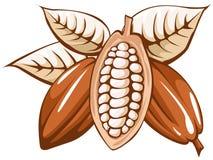 Cocoa bean. Illustration isolated on white background royalty free illustration