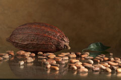 Cocoa bean. Composition of big cocoa bean with leaf on the glass table Stock Photography