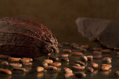 Cocoa bean with chocolate. One big cocoa bean with dark chocolate on background Stock Images