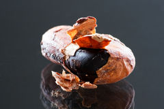 Cocoa bean closeup Stock Images