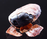 Cocoa bean closeup. On the black Stock Images