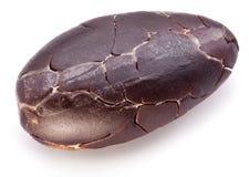 Cocoa bean. Macro. Stock Photo