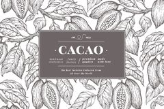 Cocoa bean tree banner template. Chocolate cocoa beans background. Vector hand drawn illustration. Vintage style. Cocoa bean tree banner template. Chocolate vector illustration