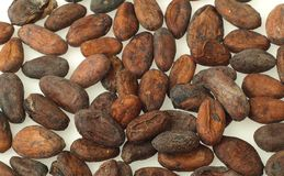 Cocoa beans. Chocolate, food, cocoa powder, chocolate production Royalty Free Stock Photography