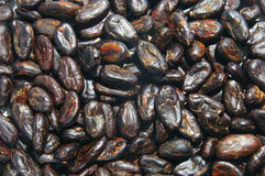 Cocoa beans. Closeup of pile of cocoa beans royalty free stock photo