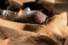 Cocoa-beans. In plastic-and jute-sacks ready to be exported Royalty Free Stock Photo