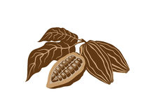 Cocoa beans. Isolated on the white background Stock Photography