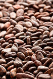 Cocoa beans background Stock Photography