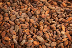 Cocoa beans background Stock Photos