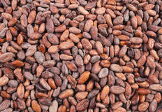 Cocoa beans background Stock Images