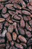 Cocoa beans - background Stock Photo