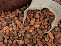 Cocoa beans in a bag. On a brown background royalty free stock images