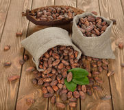 Cocoa beans in a bag Stock Photos