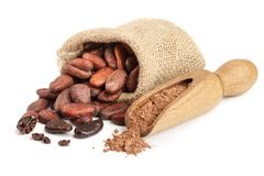Cocoa beans in bag with cocoa powder in scoop isolated on white background.  Stock Images