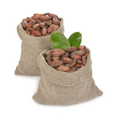Cocoa beans in a bag Stock Image