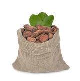 Cocoa beans in a bag Royalty Free Stock Image