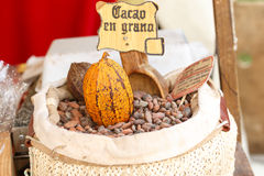 Cocoa beans. Bag with cocoa beans ready for sale Stock Photos