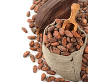 Cocoa beans in a bag Stock Images
