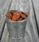 Cocoa beans in a bucket Stock Image